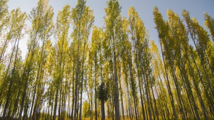 Dersim'den sonbahar renkleri 5