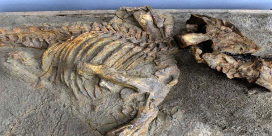 67 milyon yıllık bir dinozor fosili bulundu