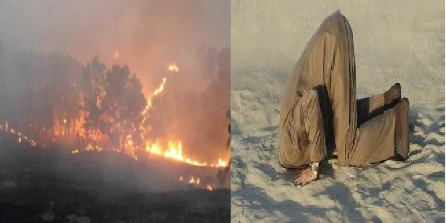 Osman Aydın yazdı: Lice Yangını Ve Doğaseverler (!)