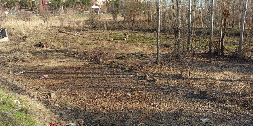 Diyarbakır'ın oksijen deposunda ağaç katliamı