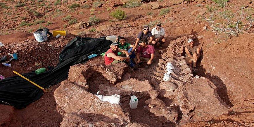 Arjantin'de rekor büyüklükte dinozor fosili keşfedildi