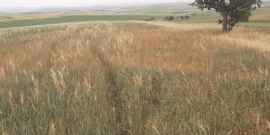 Kürt illerinde kuraklık: 'Sofralar çok kötü etkilenecek, acilen afet bölgesi ilan edilmeli'