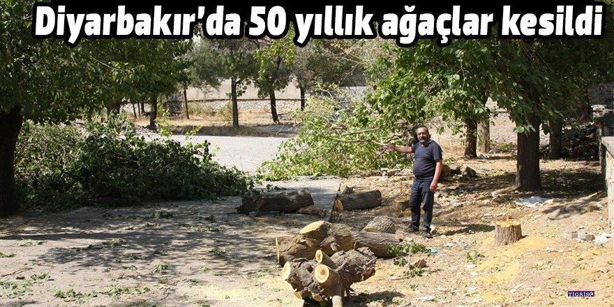 Diyarbakır'da 50 yıllık ağaçlar kesildi