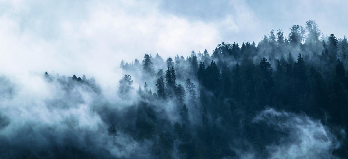 HDP'li Aydemir: Bingöl'de ormanlık alanda 'güvenlik' gerekçesiyle ağaç kesimine başlandı