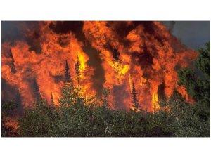 Afrin'de orman yangını devam ediyor