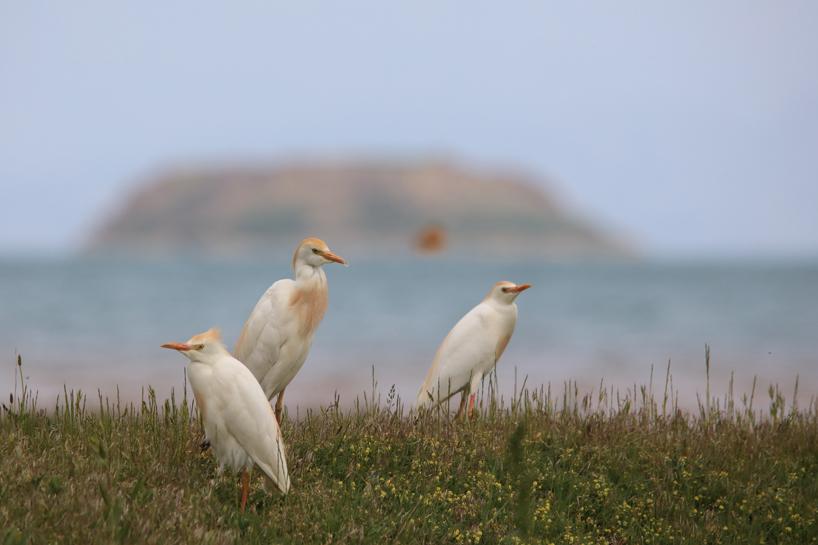 Van Gölü Havzasında 215 kuş türü yaşıyor