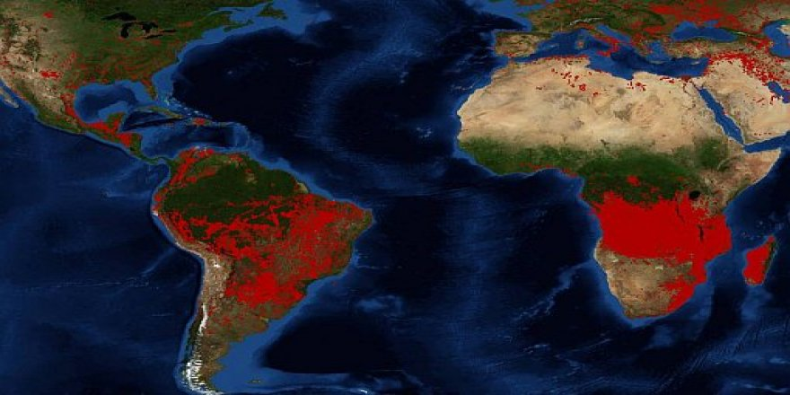 İklim Krizi: Dünyanın Dört Bir Yanından Yanıyoruz