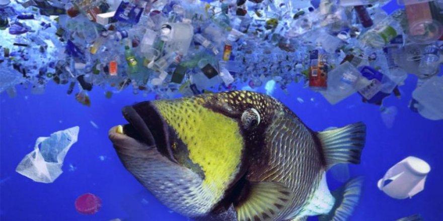 Türkiye'deki iki balıktan birinde mikroplastik var
