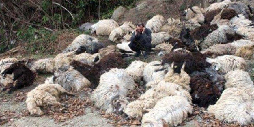 Bitlis'te 315 koyun telef oldu