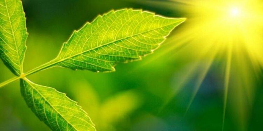Bilim insanları fotosentezin gizemini çözüyor