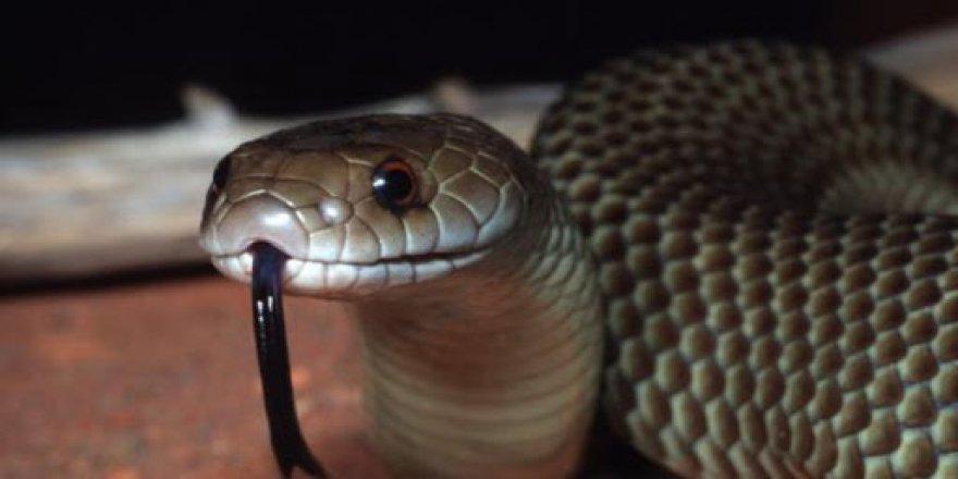 Kurbağalar toplu ölünce, yılanlar açlığa dayanamadı